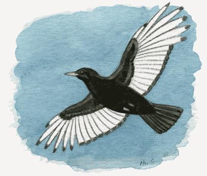 Voilà à quoi ressemblait l'oiseau dont je ne connais pas le nom