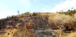 Des restes calcinés de végétation
