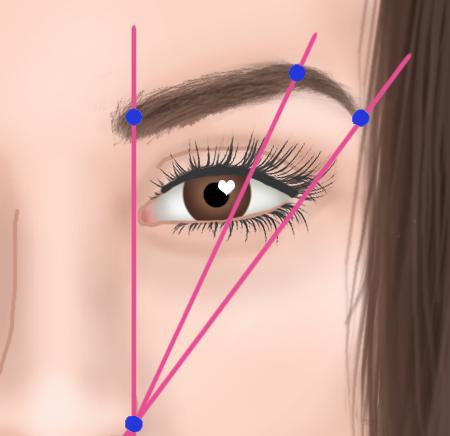 Ces lignes délimitent votre sourcil