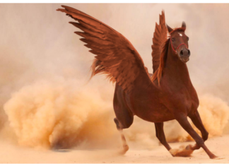 Photoshop editing tutorial and practical case: embed wings on a horse