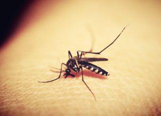 Lutter contre les moustiques, quels sont les moyens les plus efficaces ?