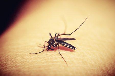 Lutter contre les moustiques, quels sont les moyens les plus efficaces?
