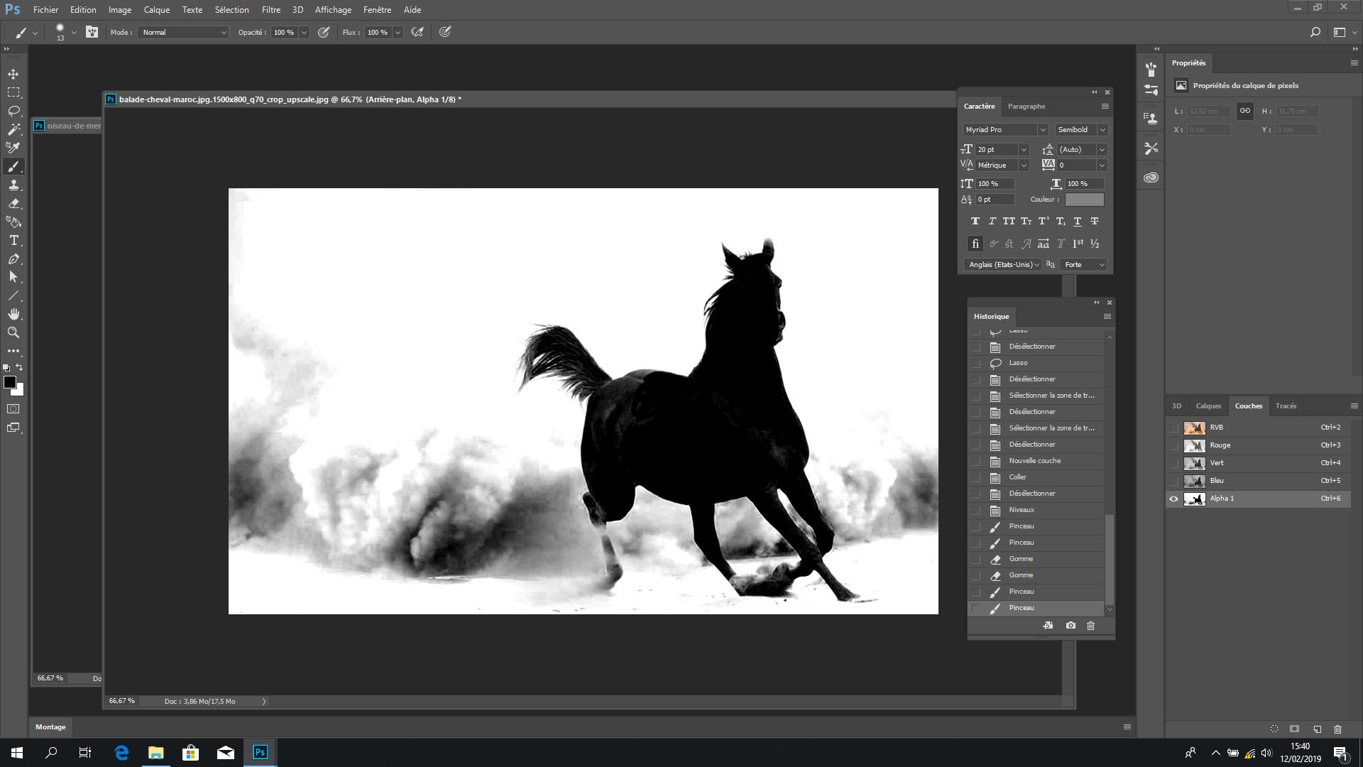 Une tête de cheval très noire sur un fond blanc