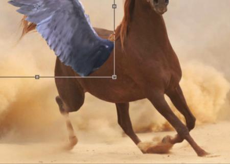 Il va falloir déformer la naissance de l'aile pour qu'elle suive la perspective du flanc du cheval