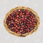 Fruits murs de cafe, panier