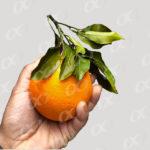 Une orange tenue par une main