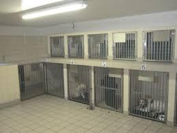 Les zones d'hospitalisations sont impératives pour bien choisir votre vétérinaire