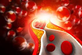 Le bon cholestérol et le mauvais cholestérol : HDL et LDL, distinguons-les