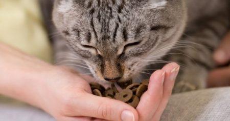Nourrir le chat, une étape difficile après un séjour à la cat friendly clinic