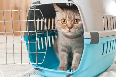 Apprivoisez votre chat au panier de transport avant de l'emmener à la cat friendly clinic de VetClinic