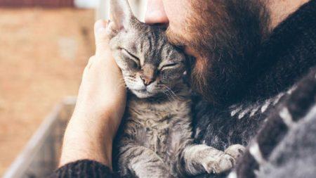 La cat friendly clinic, pour vous et votre félin
