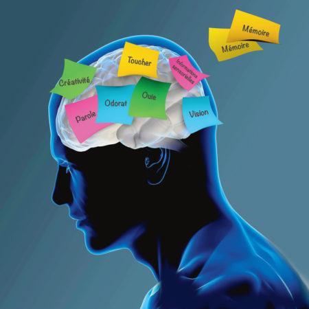 Le cerveau humain est compliqué à l'instar de cette illustration
