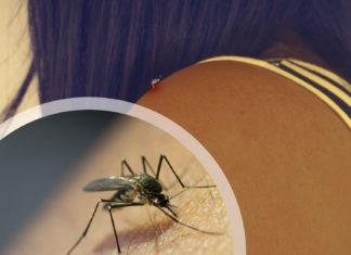 Lutte contre les moustiques: on lutte, on lutte mais ça pique toujours!