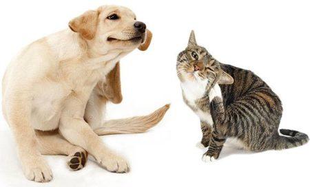La protection contre les parasites réduit les risques de démangeaison chez les chiens et les chats