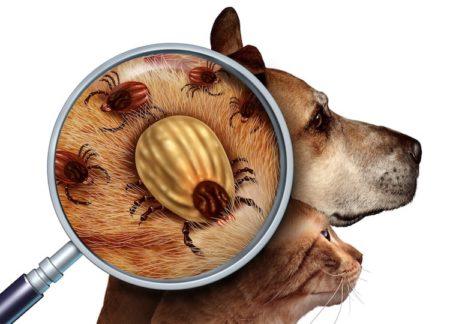 La protection contre les parasites pour lutter contre des maladies mortelles