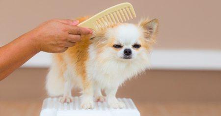 Pas besoin de tout le temps faire son bain, le talc peut aussi nettoyer le pelage du chien