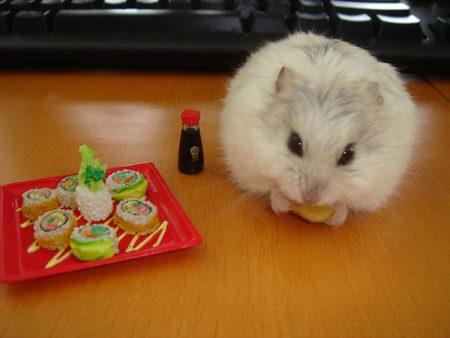 Le hamster, tellement mignon