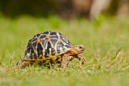 La tortue est très indépendante