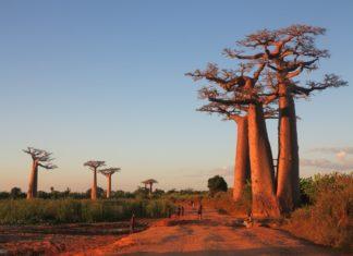 L'origine de la langue malgache ? Revenons à nos sources