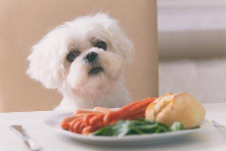 Les carottes sont conseillées pour les chiens et les chats