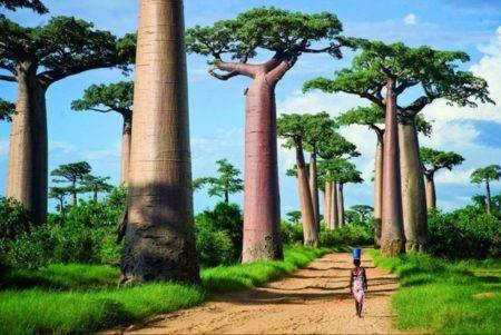 Le tourisme est parfait si vous voulez créer une société à Madagascar