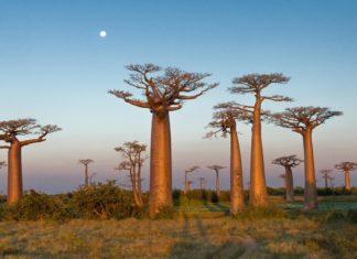 El descubrimiento de Madagascar por un capitán portugués
