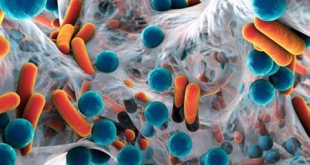 Notre intestin constitue le meilleur nid à bactéries de notre corps