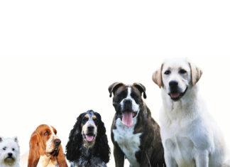 Les différentes races de chiens: zoom sur le meilleur ami de l'homme!