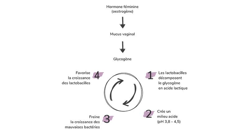La flore vaginale est très réactive face aux facteurs qui peuvent provoquer un son déséquilibre