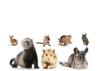 Les NAC: dites bonjour à nos nouveaux animaux de compagnie!