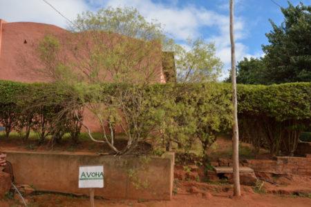 Le avoha, l'arbre qui a inspiré la fabrication du papier antemoro