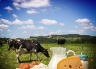 Les Tananariviens et les produits laitiers locaux de Madagascar