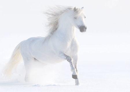Le blanc est la couleur de la propreté, de la pureté