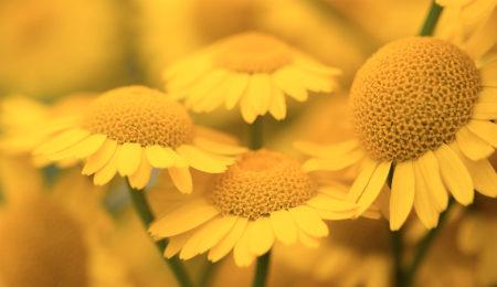 Ne trouvez-vous pas que le jaune reflète la joie de vivre?