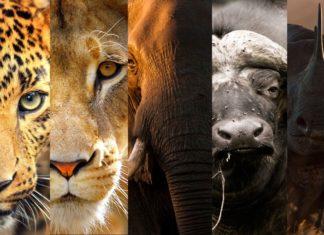 Trafic d'espèces sauvages: un danger imminent pour les vivants