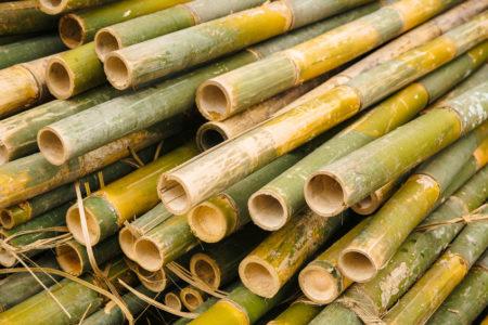 La valiha malgache est composée de essentiellement de bambou recueilli à Madagascar même