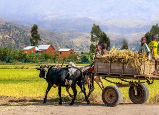 La vie à la campagne à Madagascar: aime t-on le «ambanivohitra»?