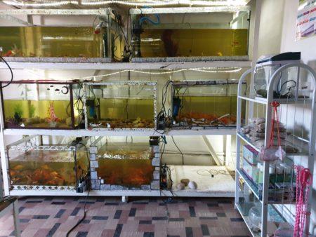 Blue Marina peut vous fournir des aquariums, pour une touche originale dans votre déco. Mais mauvaise nouvelle: leurs poissons ne sont pas comestibles:p