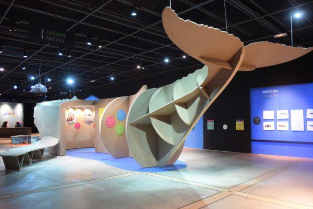 Cette baleine a été créée par Tatiana Patchama, elle a une dimension réelle