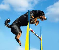 L'alimentation du chien est liée à son bien-être et à son hygiène physique