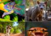 Espèces animales endémiques de Madagascar : voici mon top 5