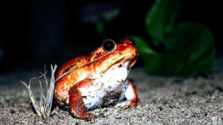 Madagascar est une île qui renferme de nombreuses espèces d'animaux uniques en son genre