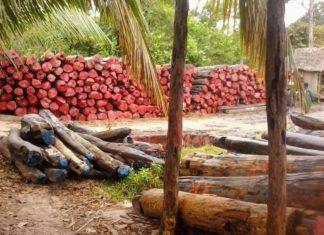 Les bois précieux de Madagascar : le bois de rose et le bois d'ébène en avant