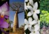 La flore de Madagascar: découvrez 4 merveilles naturelles de l'île