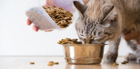 Dans ce guide pour propriétaires d'animaux domestiques, vous découvrirez l'importance des informations sur le web