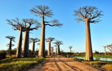 El pasillo baobab, uno de los mejores lugares para admirar la puesta de sol