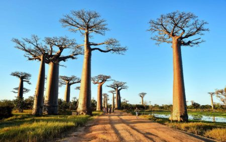 The baobab aisle, one of the best places to admire the sunset