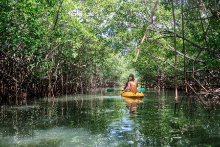 Las 320.000 hectáreas de manglares de la isla están a la espera de ser descubiertas
