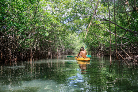 The island's 320,000 ha of mangroves are just waiting to be discovered