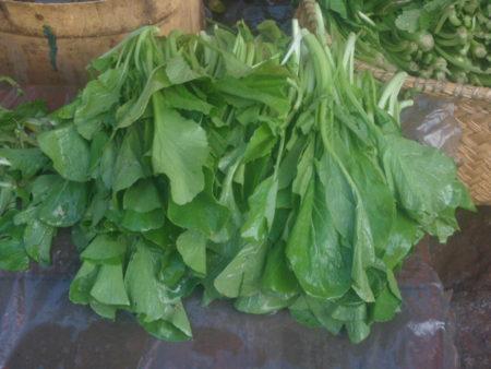 Les jeunes feuilles de tyssam sont plus agréables à consommer